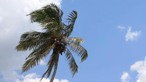 palm tree on blue sky Stock Video Footage