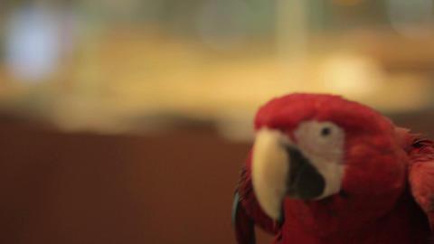 parrot bird Stock Video Footage