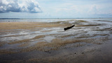 Low Tide stock footage