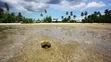 low tide Footage