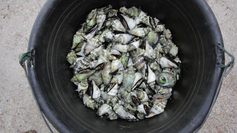 oyster during low tide Stock Video Footage