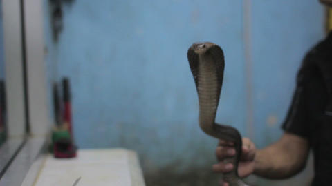 snake blood wine shop Stock Video Footage