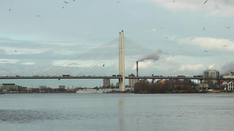 Birds circling in the sky above cable-stayed bridge Footage