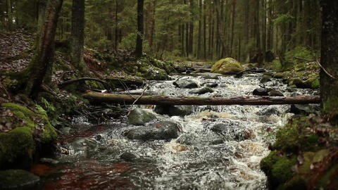 roll on a fast forest river Footage