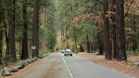 Road inside the Yosemite National Park with Autumn Leaves, California Live Action