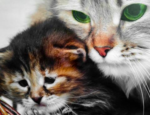 Cat and kitten Foto