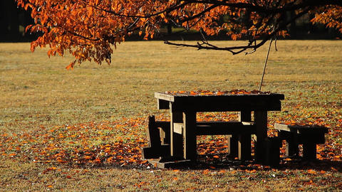 Wooden Table and Bench / Morning Sunlight / Autumn Park - Fix ビデオ