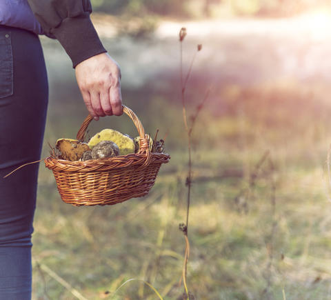 basket with forest mushrooms in a female hand Foto