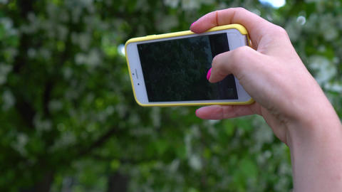 Woman takes low angle picture of green tree top. Close up shot of hand with Live Action