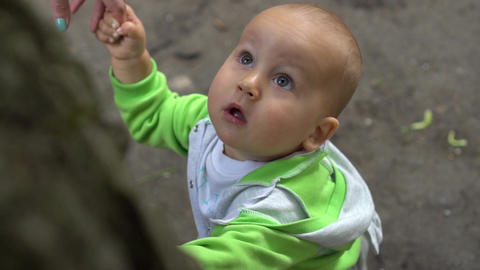 Amazed baby stares up on tree top with wide opened eyes. Handheld slow motion Footage