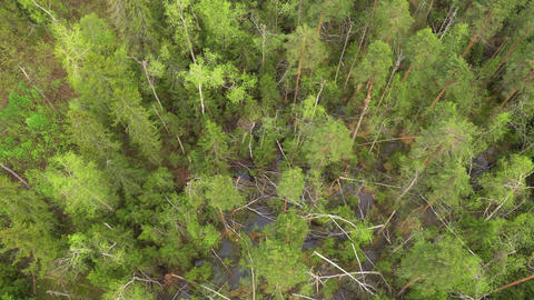 Flying over a pine forest. Aerial shot Footage