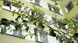 high-rise block of flats with tree branch Footage