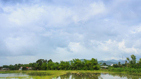 Panorama Of Cloudy Sky Over Rice Field In Water Forest Village stock footage