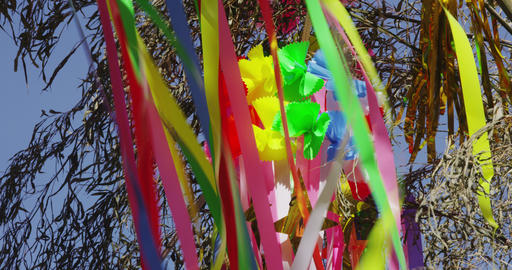 Colorful Tokyo Tanabata Festival Live Action