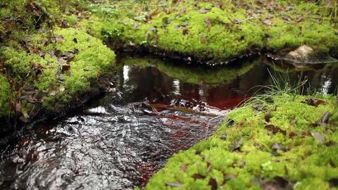 forest stream murmur ビデオ
