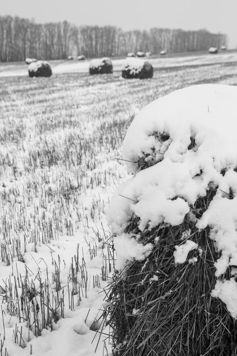 Rags-rolls of hay on the snow-covered field Fotografía