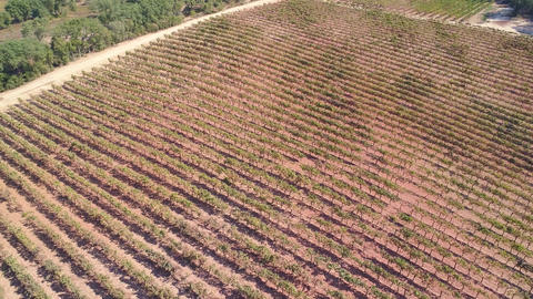 Aerial View of Vineyards Sesimbra Footage