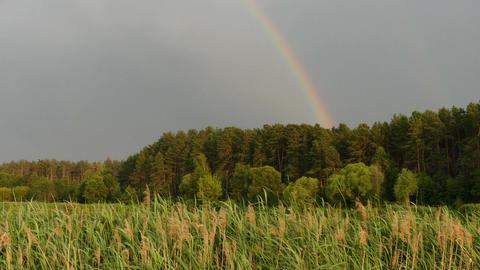 Beautiful rainbow over forest Footage