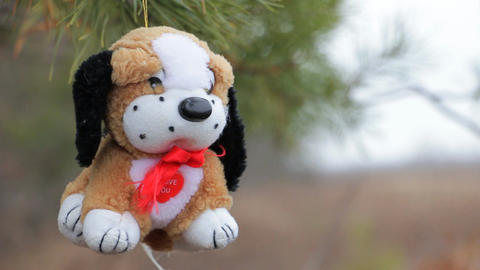 Plush dog on the pine branches Archivo