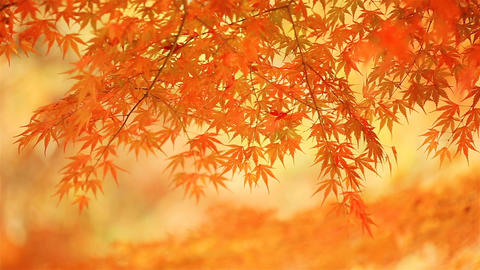Blurred autumn background ライブ動画
