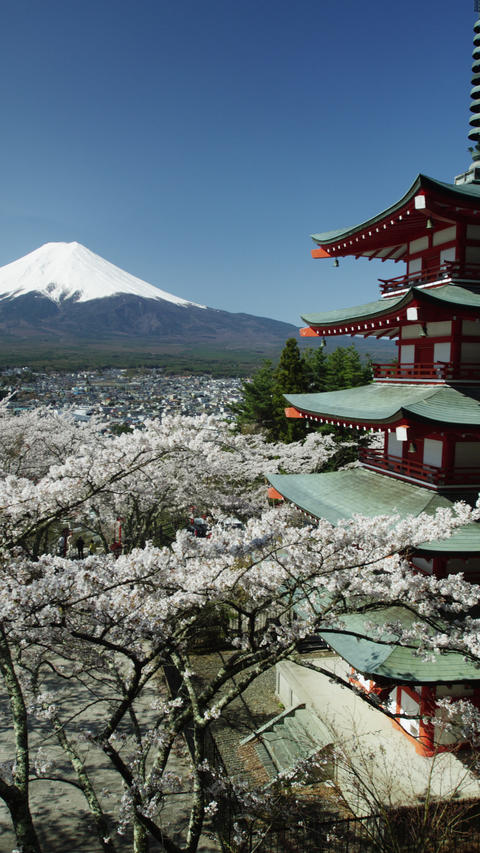 Cherry Blossom Time near Mount Fuji in 4k Footage