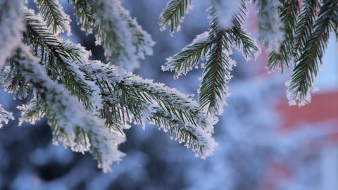 Snow On The Pine Branch stock footage