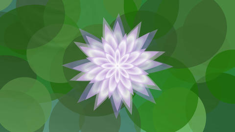 Flower of water lily growing on water surface. Animation of beautiful pink lotus Animation