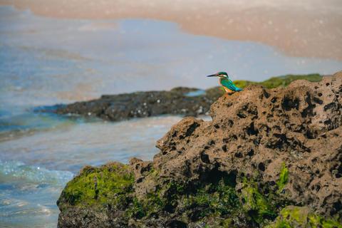 Common kingfisher Alcedo atthis bird sitting on the sea rock at フォト