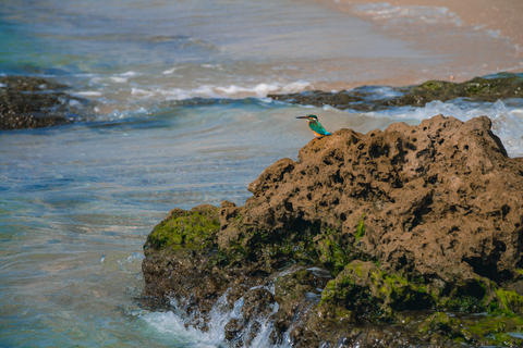 Common kingfisher Alcedo atthis bird sitting on the sea rock at Photo