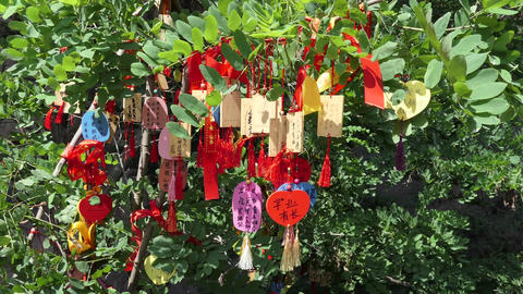Buddhist Prayers On A Tree Branch In China Asia Footage
