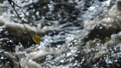 Pure freshwater stream in the deciduous forest in autumn Footage