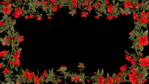 Red Roses Growing Frame With Alpha Channel CG動画素材