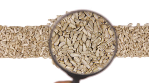 Magnifying glass increases the sunflower seeds Footage
