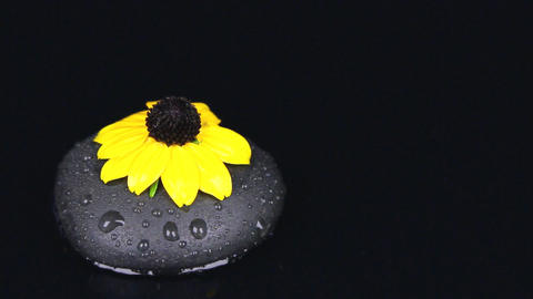 Falling drops into water with a black stone and flower Footage