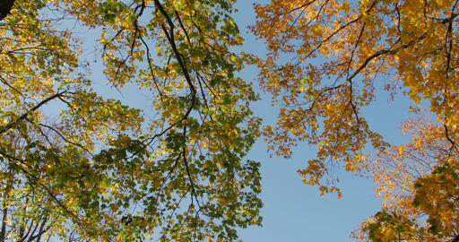 Warm autumn sun shining through colorful foliage treetops on beautiful sunny day Footage