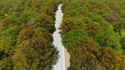 Aerial view country road in autumn forest Filmmaterial