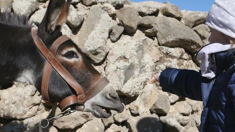 Little girl feeding a donkey Filmmaterial