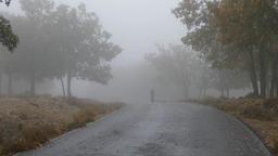 Mysterious silhouette walking on misty road Bild