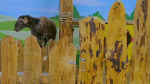 Cute brown sheep Footage