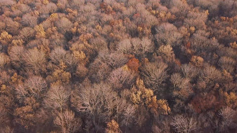 View from the height on the autumn forest Filmmaterial