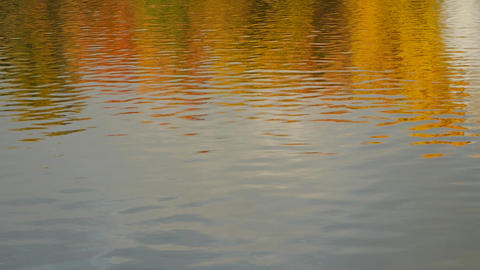 Autumn daylight landscape reflected in water Footage