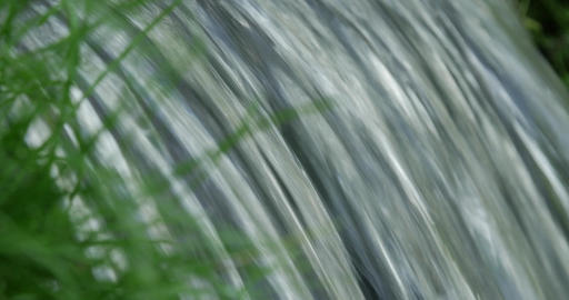 Close up shot of spring flowing through raw green of grass Footage