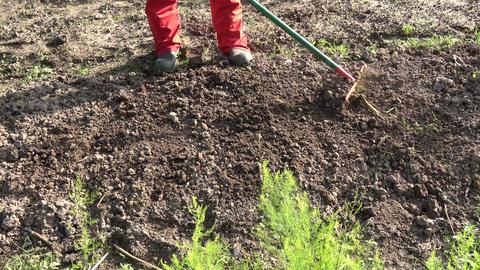 gardener rake vegetables flowers bed soil Live Action