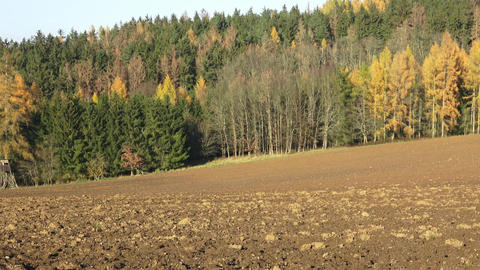 Plowed fields surrounded by forests. Autumn landscape - plowed field and forest Footage