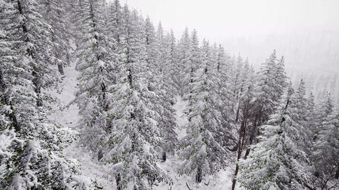 4K Aerial Background High Above Winter Snow Covered Trees Footage