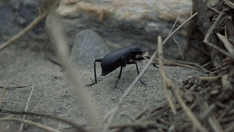 1000fps, Real slowmo of an andalusian bug Live Action
