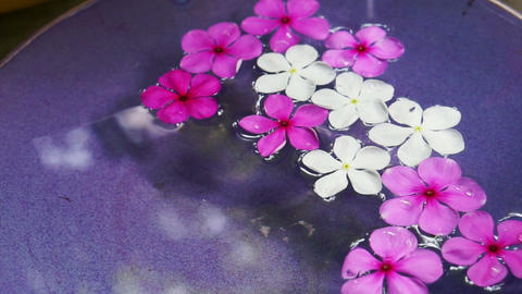 Video pink flowers floating in bowl of water from top view. Spa decoration Live Action