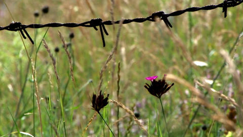 Dried herbs and green herbs moves behind a barbed wire fence Live Action