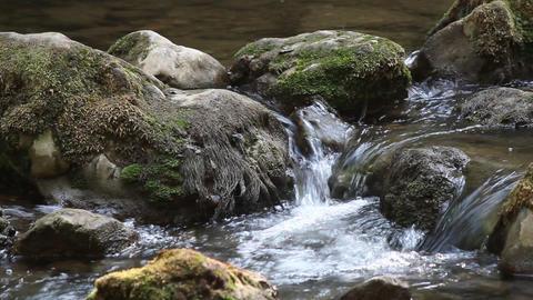 creek nature scene Footage