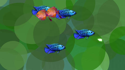 Video animation orange and blue exotic fishes in green… Stock Video Footage